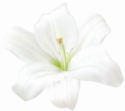 Lily Clip Flowers Flower Clipart Lilium Lilies