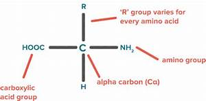 Nitrate And Ammonia Assimilation By Plants  Important For Ugc Net  Upsc Cse  Ssc