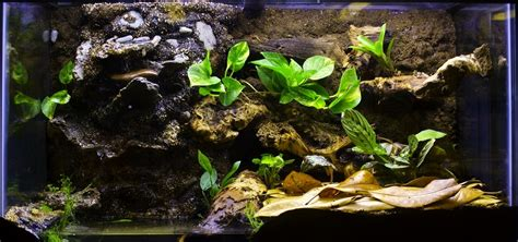 how to take care of a frog frog care and frog tanks pet territory