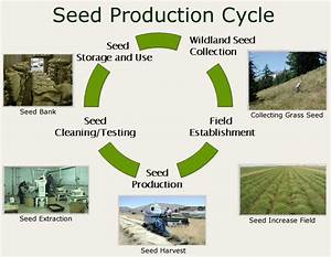 Seed And Nursery Stock Production