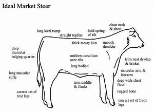 Ideal Market Steer