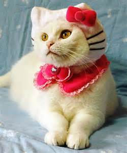 kitty cat kitty cat 15 hilarious cats in costumes kitty bloger