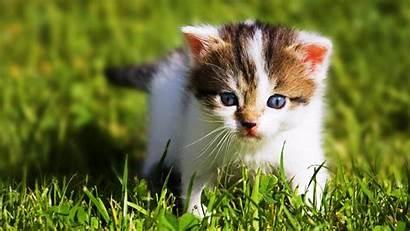 Animal Wallpapers Animals Pixelstalk Bing