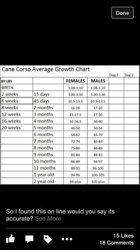 cane corso growth chart cane corso puppies cane corso