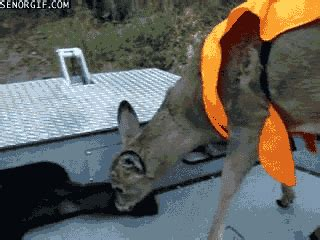 deer hunting gif find share  giphy