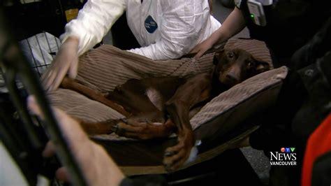 rescue at centre of massive seizure had 71 animals removed