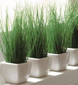 menanam merawat bambu air tukang taman jogja