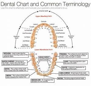 En   U2013 Dental Chart
