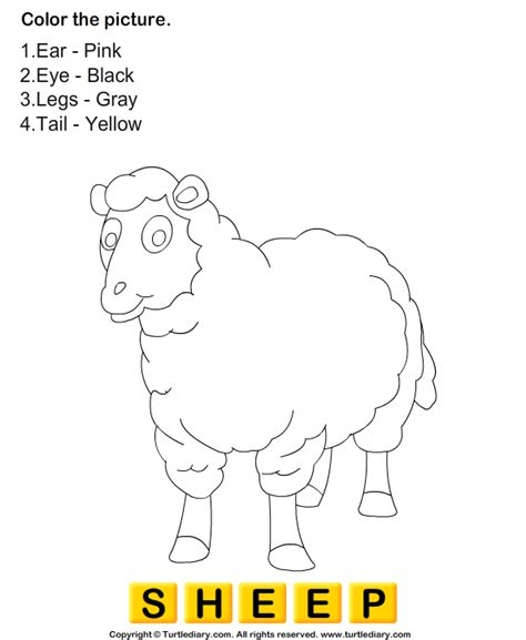 coloring sheep worksheet turtle diary