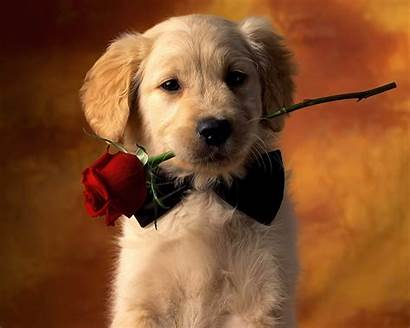 Wallpapers Puppies Puppy Dogs Very