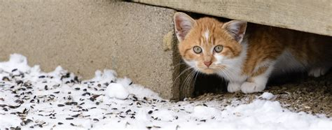 cats winter feral dangerous caring cold during hartz