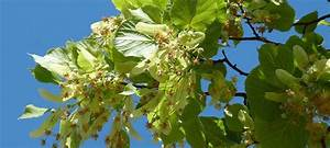 Erdbeeren Ableger Entfernen : ph nologischer kalender das ist jetzt im hochsommer zu tun ~ Frokenaadalensverden.com Haus und Dekorationen