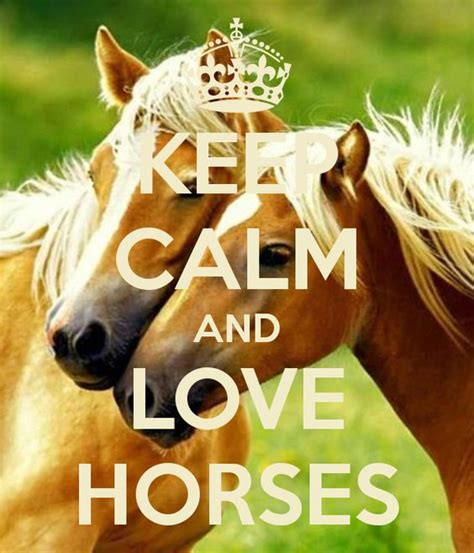 calm keep horses horse sayings cat quotes horeses abyssinian ride them animals posters poster heart moved until cool names film
