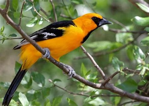 pictures of birds in the hill country of texas 35 best birds of the hill country images on hill country beautiful