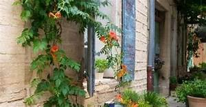 Plantes Grimpantes Mur : les plantes grimpantes pour recouvrir un mur ~ Melissatoandfro.com Idées de Décoration