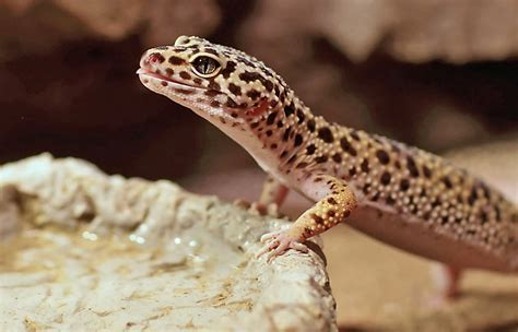 reptile supplies reptile accessories products petsmart