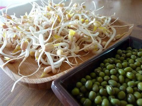 cuisiner les pousses de soja les pousses ou germes de soja cuisine bio et les