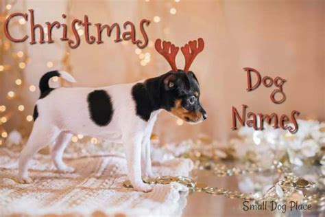 christmas puppy names small dog place