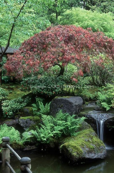 asian garden plants pin by marguerite on garden retreats pinterest