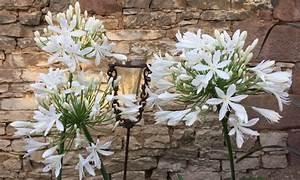 Efeu Pflanzen Kaufen : garten pflanzen kaufen sichtschutz pflanzen kaufen garten ~ Michelbontemps.com Haus und Dekorationen