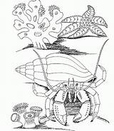 Coloring Underwater Sea Pages Under Ocean Animals Printable Grassland Scene Popular Plants Drawing Print Adults Creatures Getcolorings Carb Printables Getcoloringpages sketch template