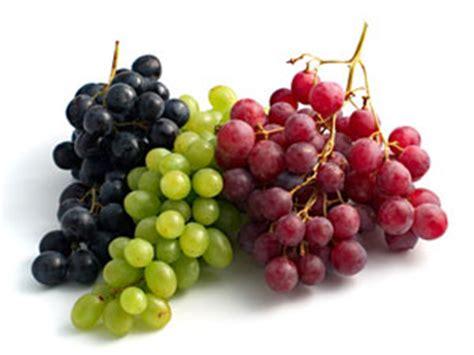 le grappe de raisin le raisin