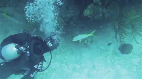 lionfish grouper eats