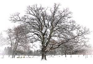 winter tree edward photography journal 2013