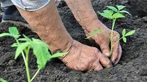 Gurken Pflanzen Anleitung : tomaten richtig pflanzen tomaten richtig pflanzen der gro e ratgeber tomaten richtig pflanzen ~ Whattoseeinmadrid.com Haus und Dekorationen