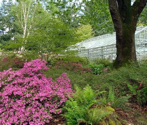 rhododendron federal way rhododendron species botanical garden federal way wa top tips before you go with photos