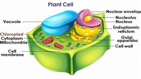 characteristics   plant cell qs study