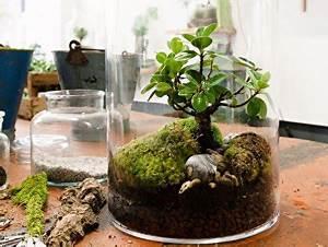 Minibar Für Wohnzimmer : garten im glas mini biotop f rs wohnzimmer gestalten ~ Orissabook.com Haus und Dekorationen
