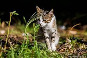 Katzen Aus Garten Vertreiben : katzen bilder wallpaper ~ Frokenaadalensverden.com Haus und Dekorationen