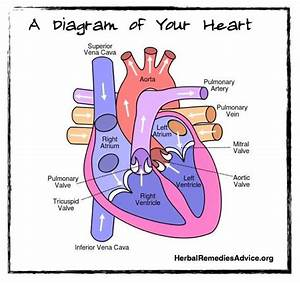 Cardiovascular system diagram. | Good to Know | Pinterest ...
