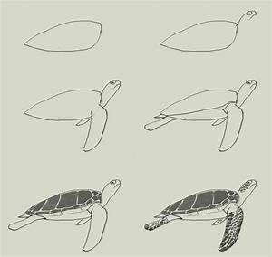 how-to-draw-green-turtle.jpg (700×662) | Draw | Pinterest ...