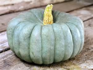 Varieties Of Pumpkins In Australia by Jarrahdale Pumpkin Baker Creek Heirloom Seeds