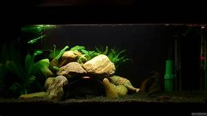 Aquarium Ohne Wasserwechsel : mein kleines aquarium flowgrow aquascape aquarien datenbank ~ Eleganceandgraceweddings.com Haus und Dekorationen