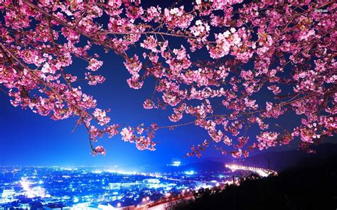 Anime Wallpaper Cherry Blossom by Pin By Ebs On Paddle Ideazzz Cherry Blossom Wallpaper