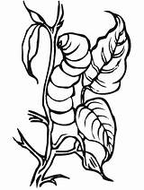 Coloring Pages Insect Insects Primarygames Bug Science Color2 Cartoon Fun Lizard sketch template