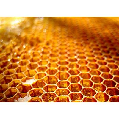 honeycomb closeup - Brighton Honey