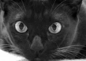 gato preto on Tumblr