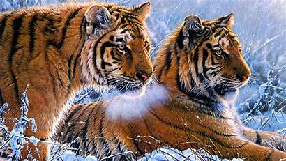 4k Wallpapers Oil Paint Tigers