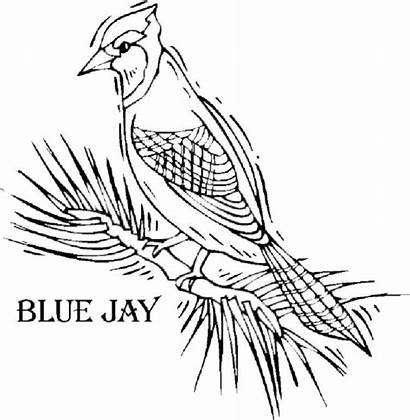 Jay Coloring Bird Printable Oiseaux Simple Ausmalbilder
