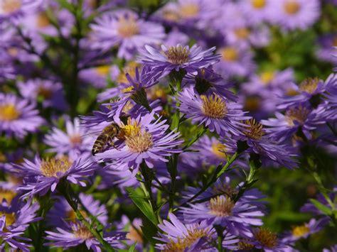 Der Bienenfreundliche Garten by Der Bienenfreundliche Garten Mein Eigenheim