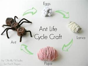 Insect Science  Ant Life Cycle Craft