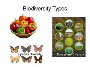 Ppt Triage Biodiversity