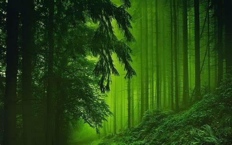 forest plants stream wallpapers forest plants stream stock