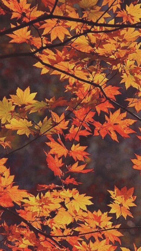 fall colors red yellow orange  brown fall