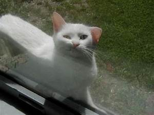 Funny cats - part 17 (41 pics) | Amazing Creatures  Funny