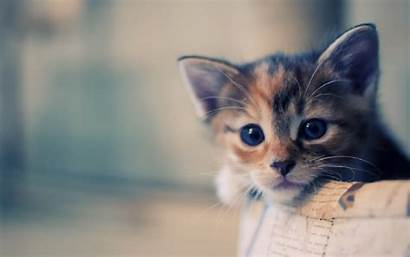 Cat Cats Themes Chrome Web Kittens Wallpapers